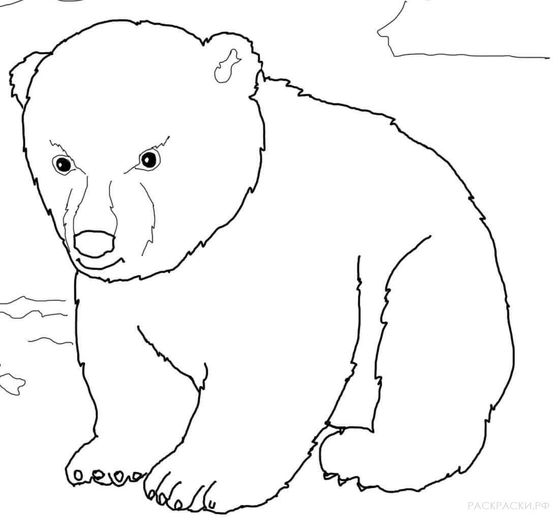 Картинки для детей черно-белые медведь