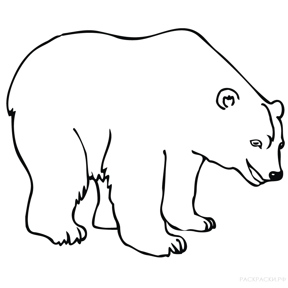раскраска животные белый медведь улыбается раскраски рф