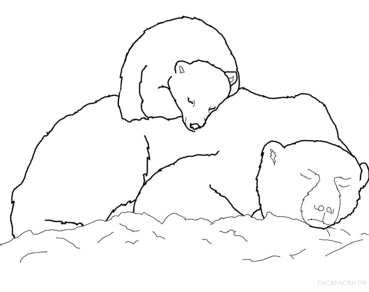 раскраска животные медвежонок белого медведя спит на маме