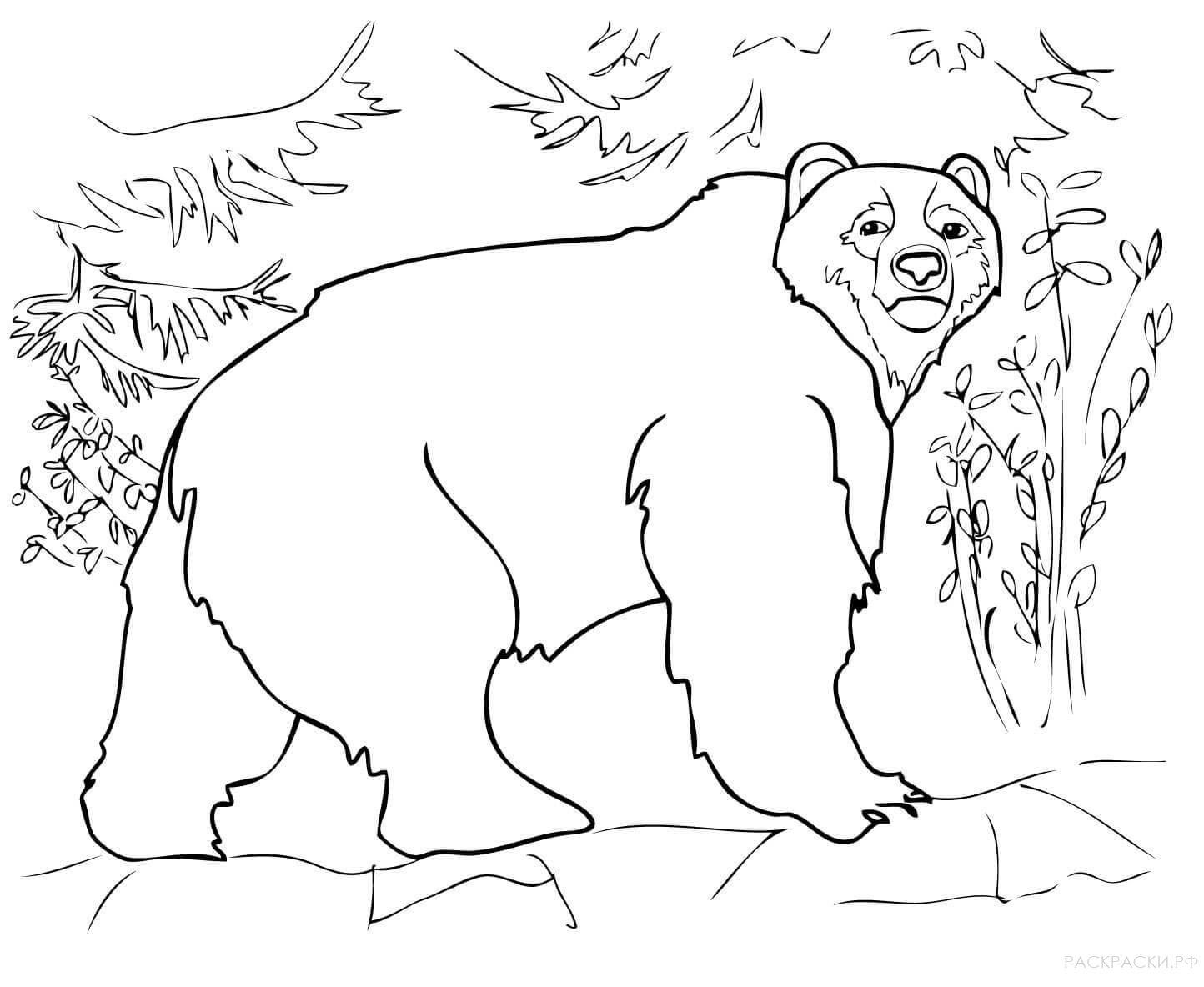 рисунок медведя для раскрашивания технологии прыгающих частот
