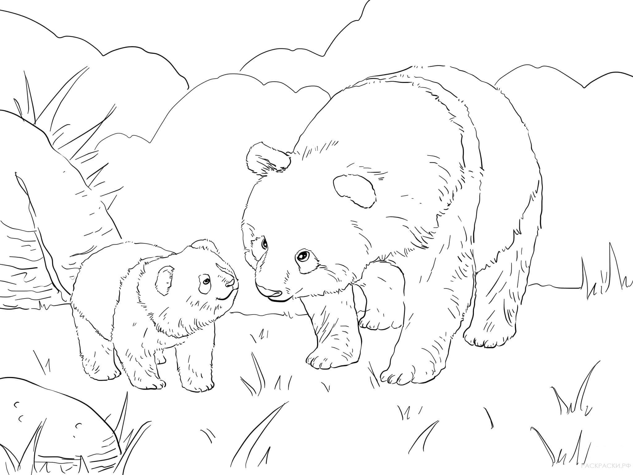 фотографий раскраска панда милая распечатать чемпионов