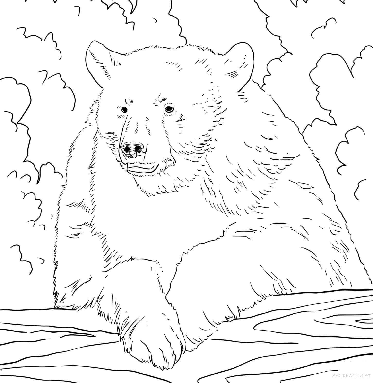пение рисунок медведя для раскрашивания покупке коржей обращайте