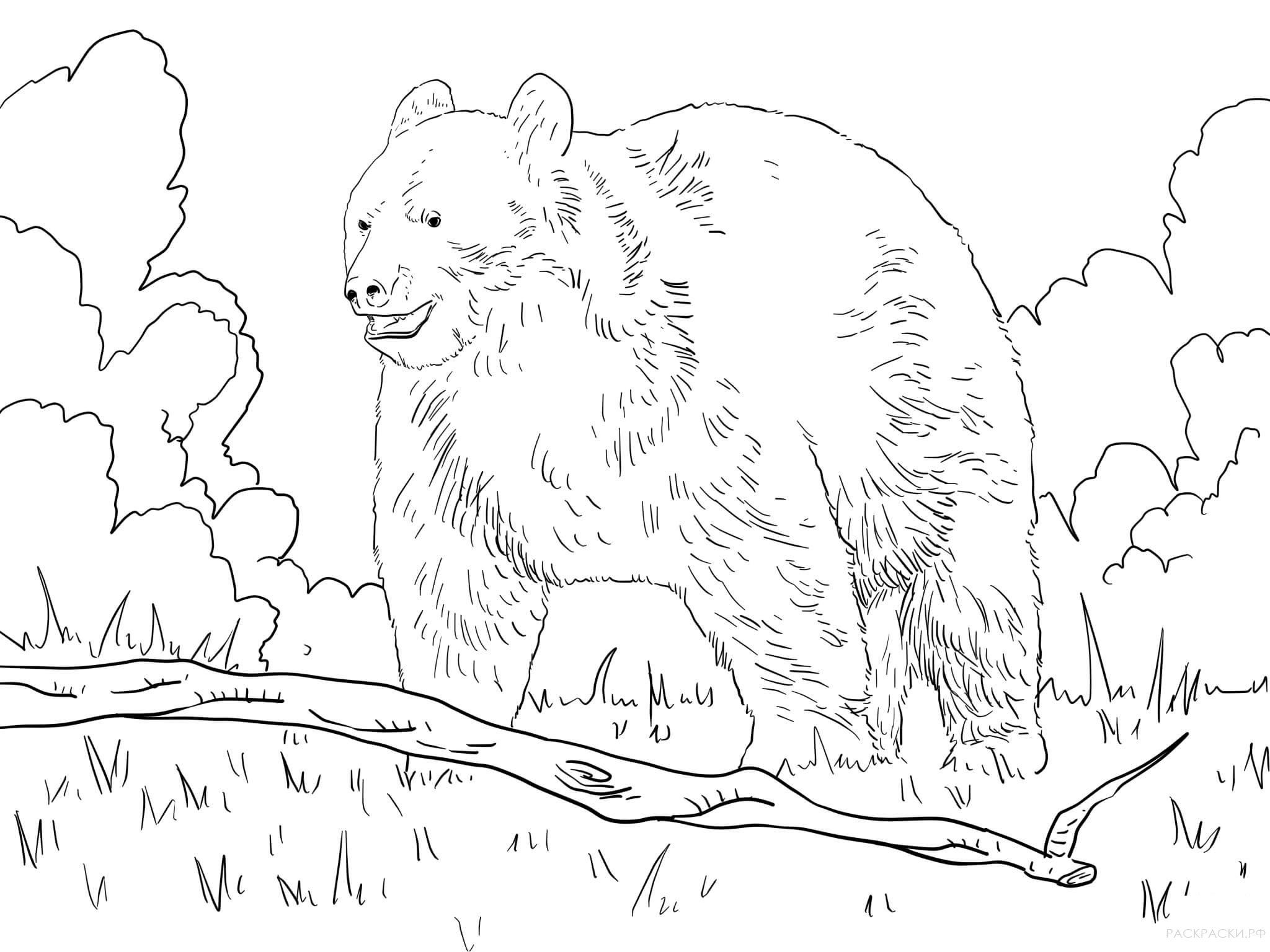 Раскраска мишки в лесу шишкин