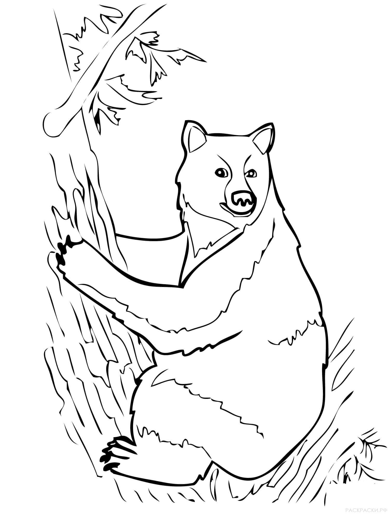 Рисунок к рассказу бианки музыкант черно белый