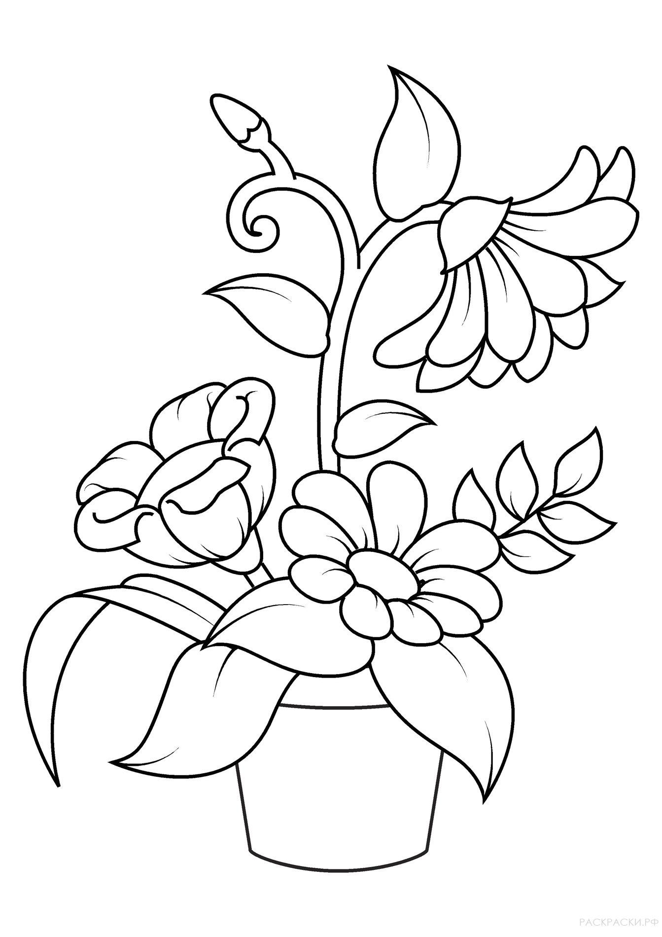 Раскраска Большие цветы в горшке » Раскраски.рф ...