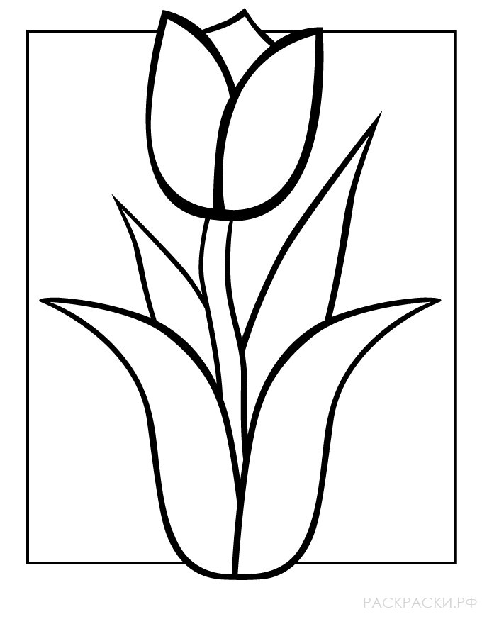 Тюльпан раскраска для детей крупная