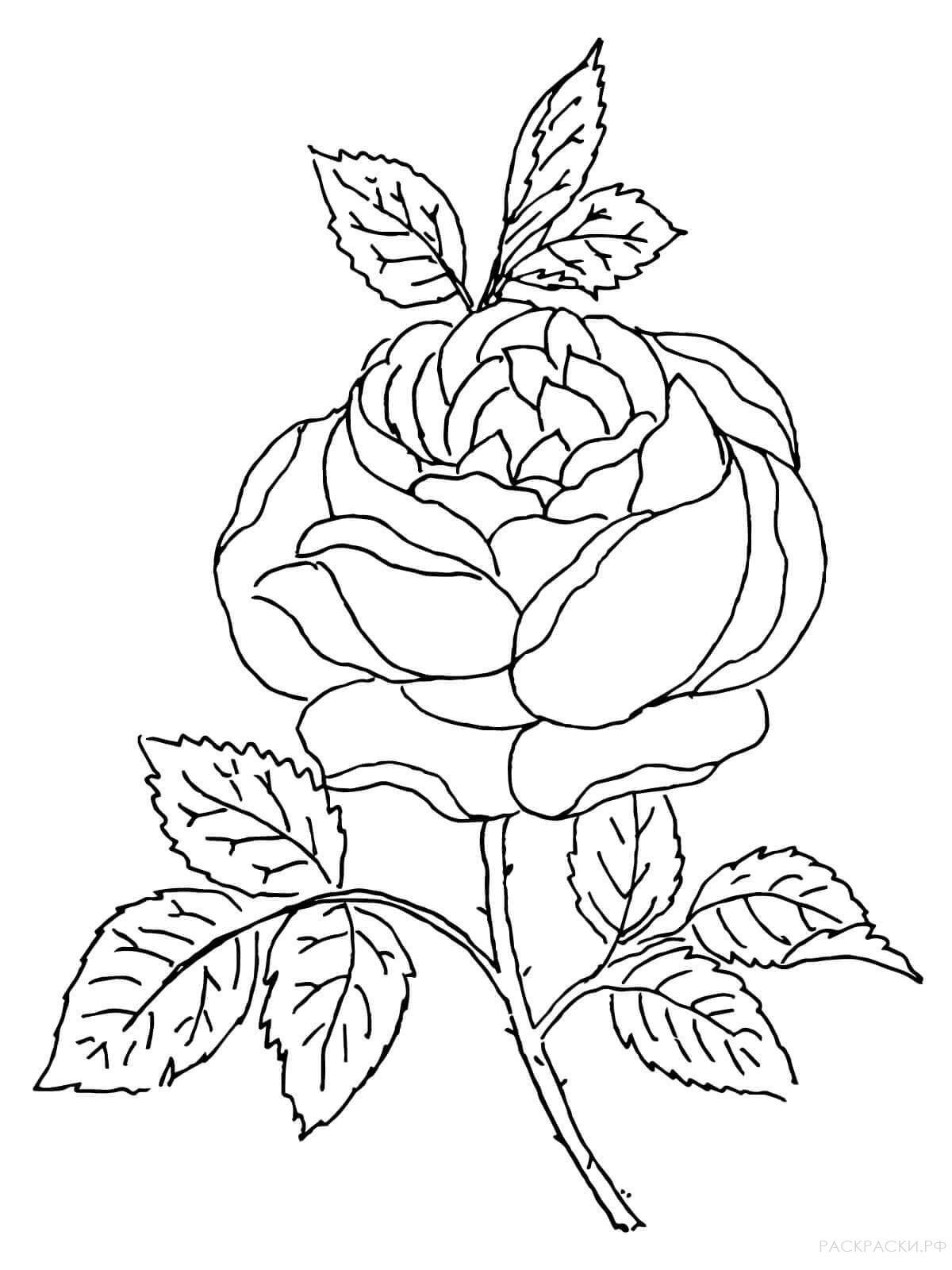 Картинки цветы распечатать на принтере