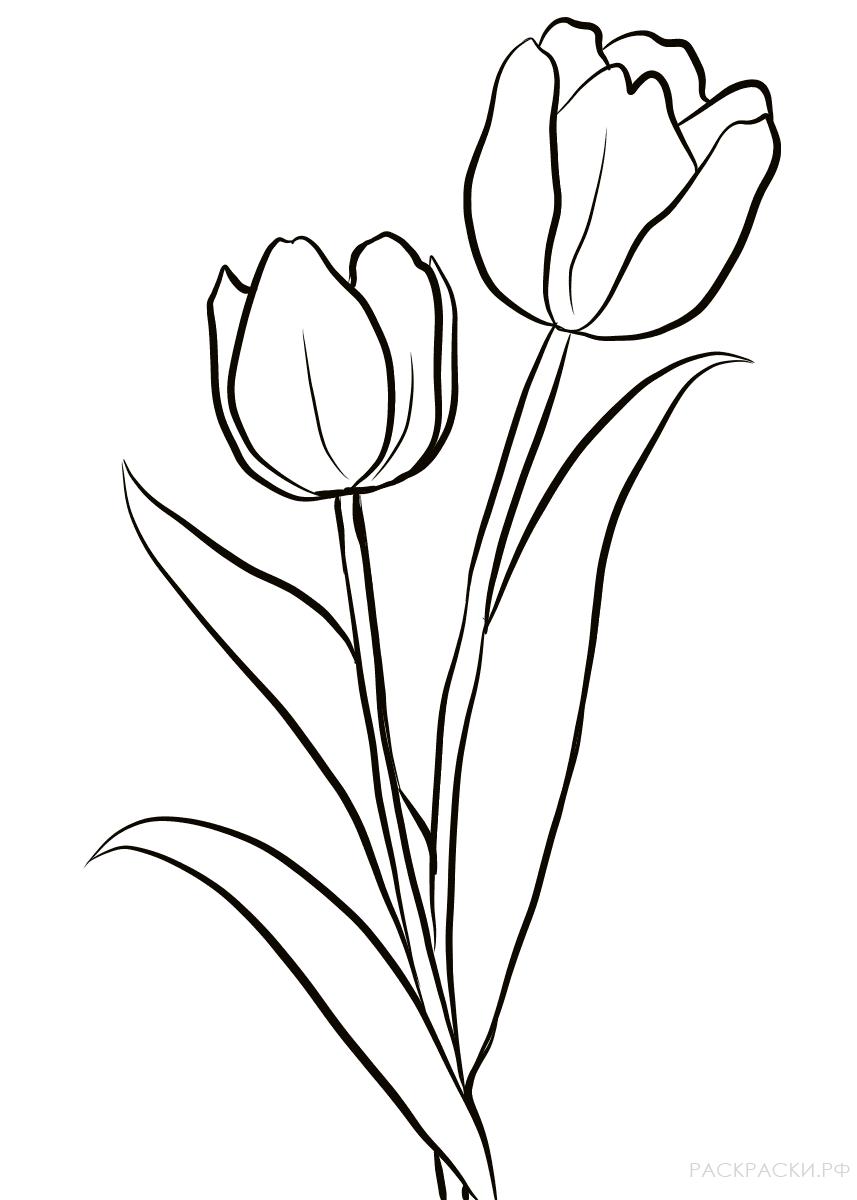 Польском рождеством, рисунок тюльпана для детей шаблоны