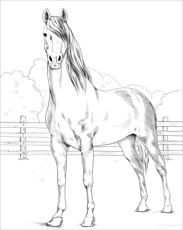Картинки с лошадьми распечатать