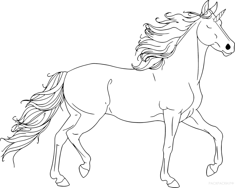 Красивые картинки лошадей распечатать