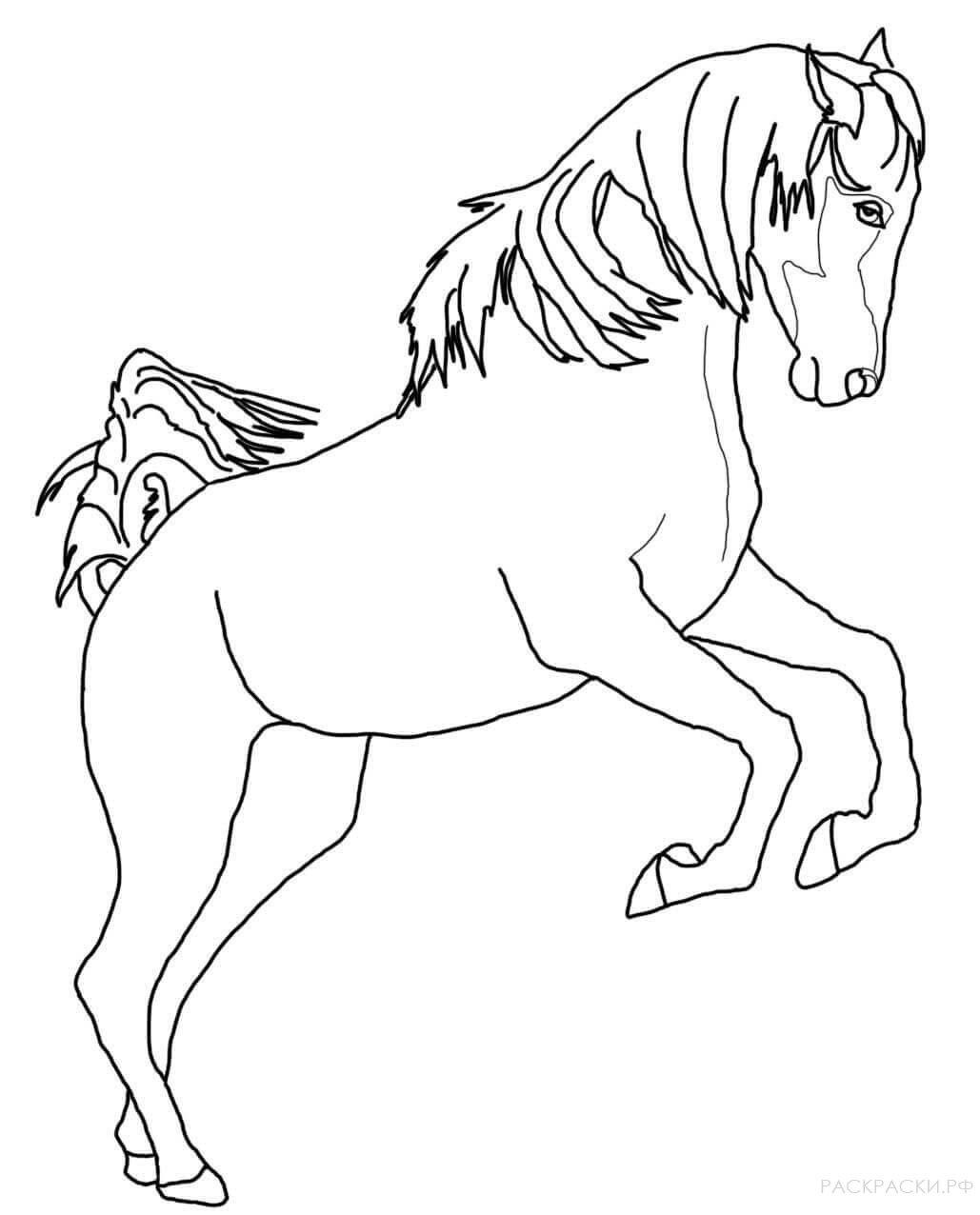 картинки лошади не раскрашенные прав