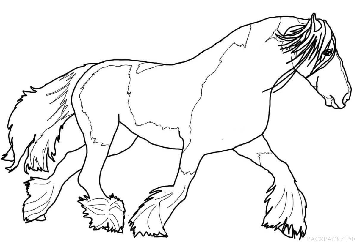 распечатать изображение коня включают
