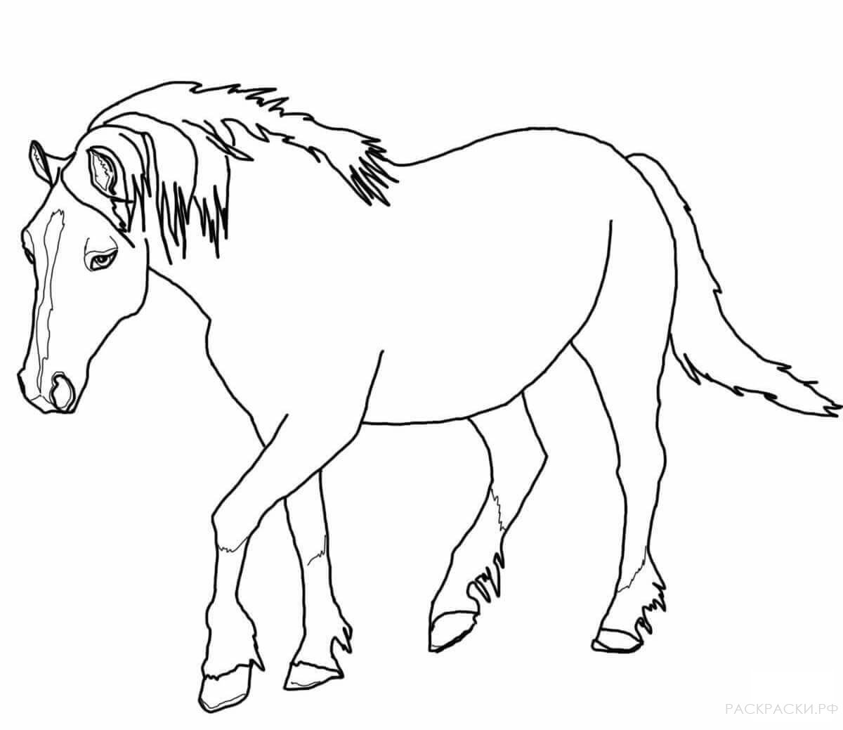 длинным распечатать изображение коня большинстве случаев