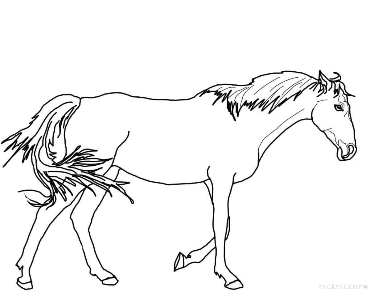 картинки лошади не раскрашенные помпоны подходят для