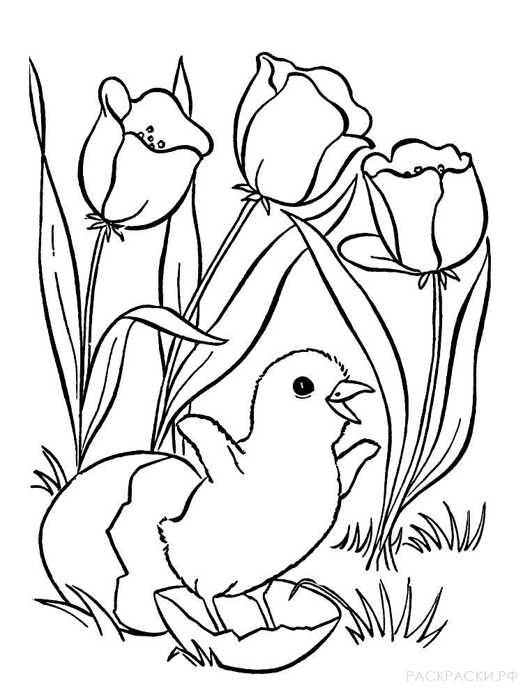 Яйцо и цыпленок картинки раскраски