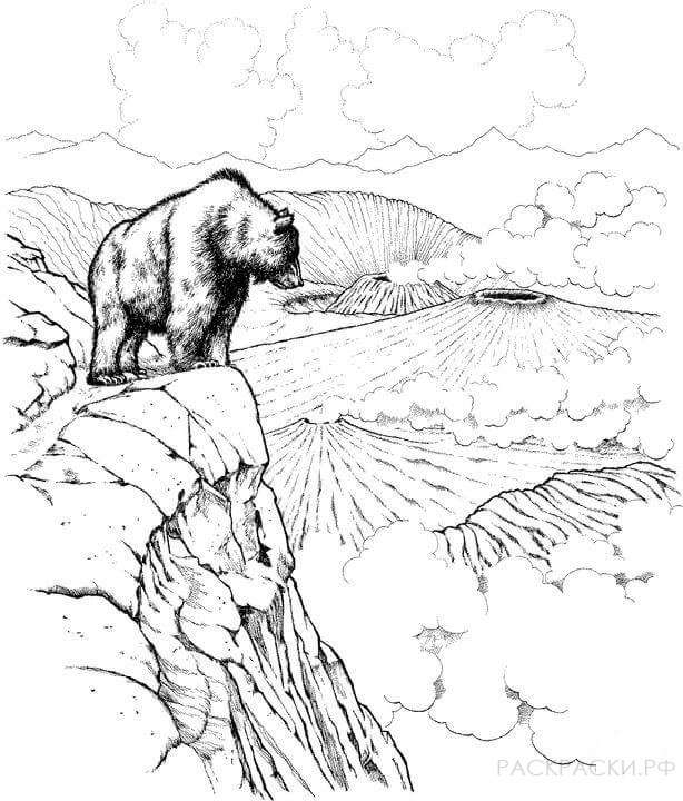 Раскраска Животные Бурый медведь и вулканы