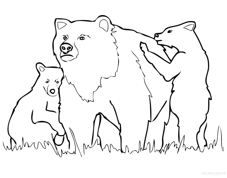 Как фото с медведем раскраски