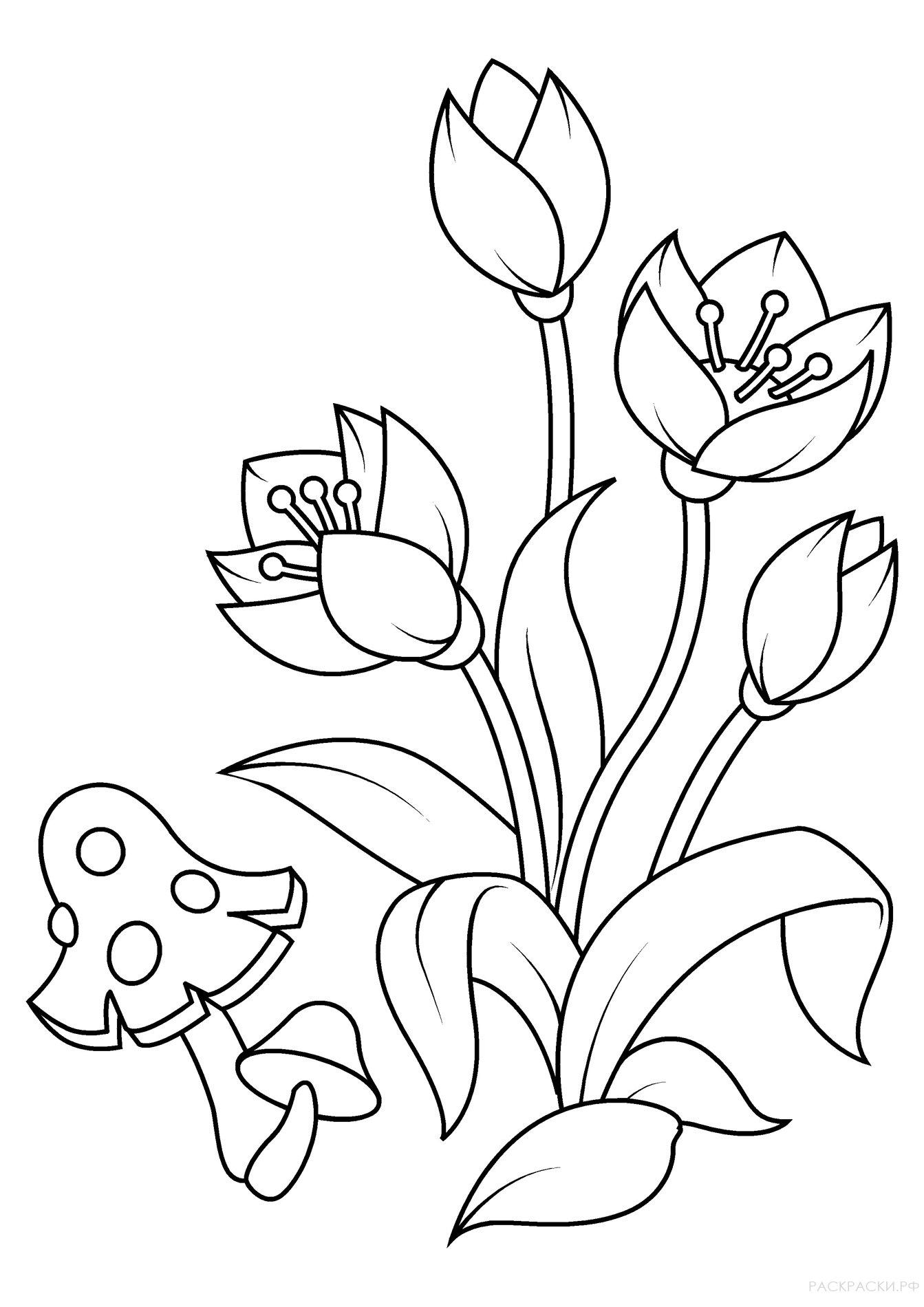 Раскраски цветы и грибы