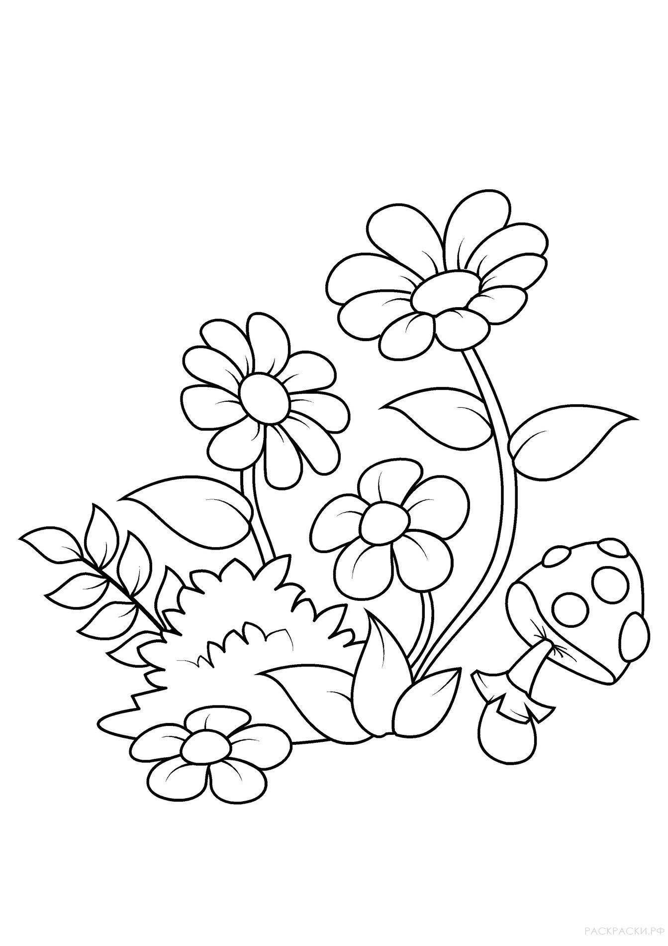 Раскраска Цветы Гладиолусы » Раскраски.рф - распечатать ...