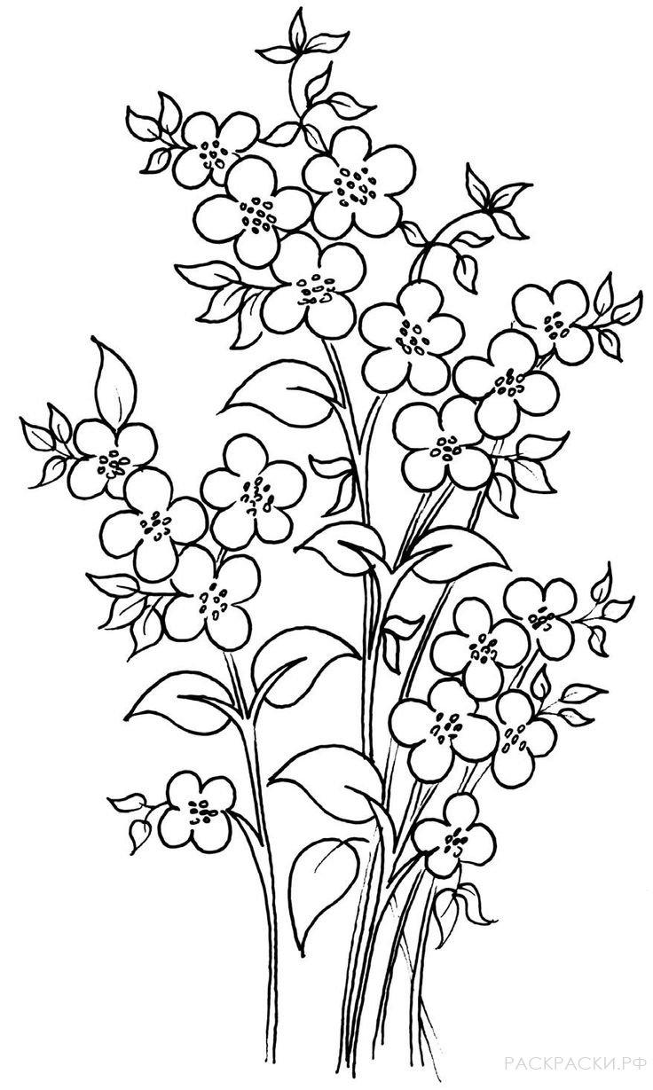 Раскраска Веточки с цветами