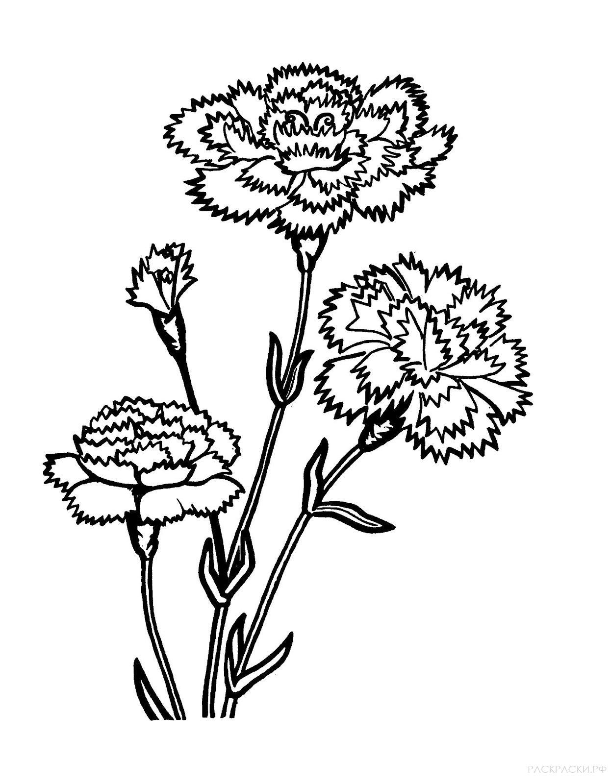 Раскраска Три гвоздики
