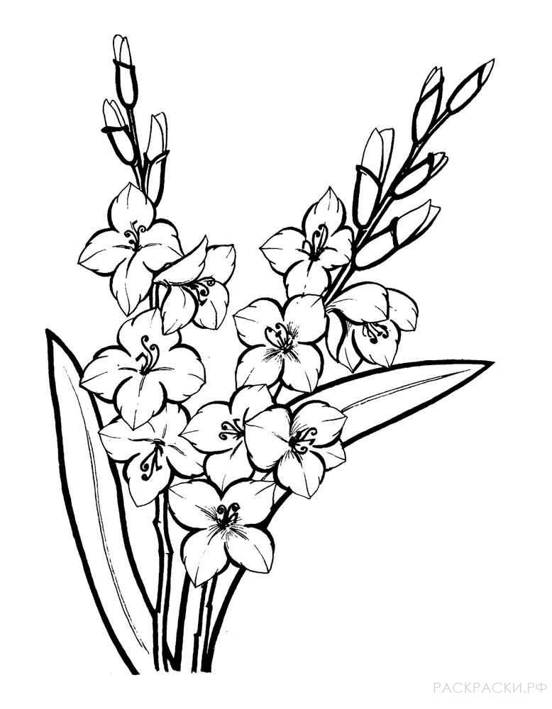 Раскраска Цветы Гладиолусы