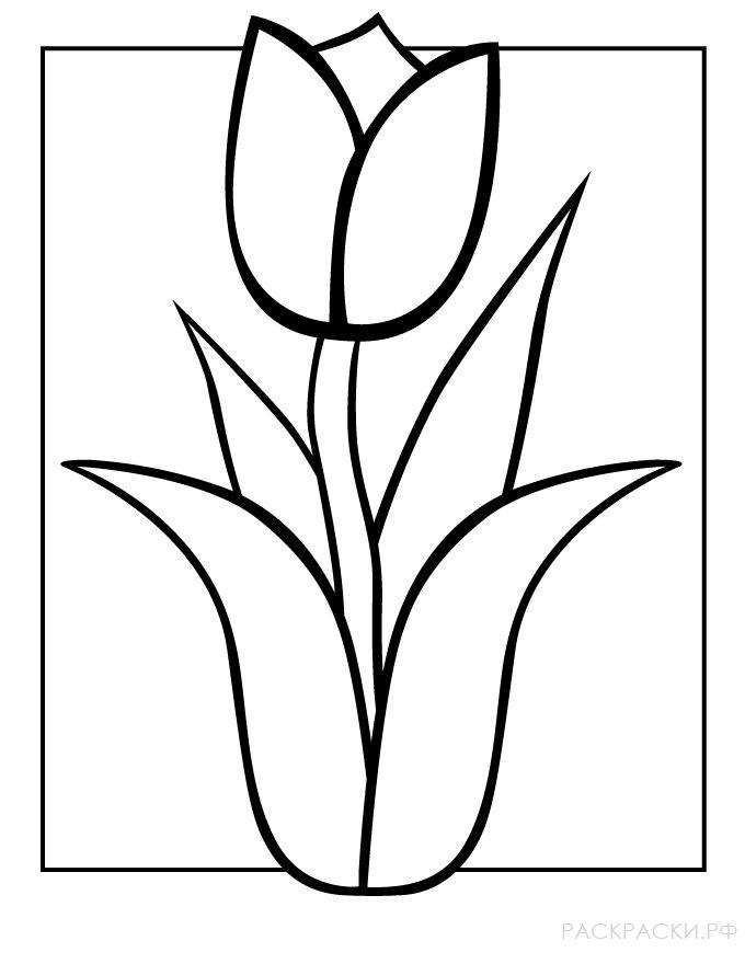 Раскраска Цветок тюльпан