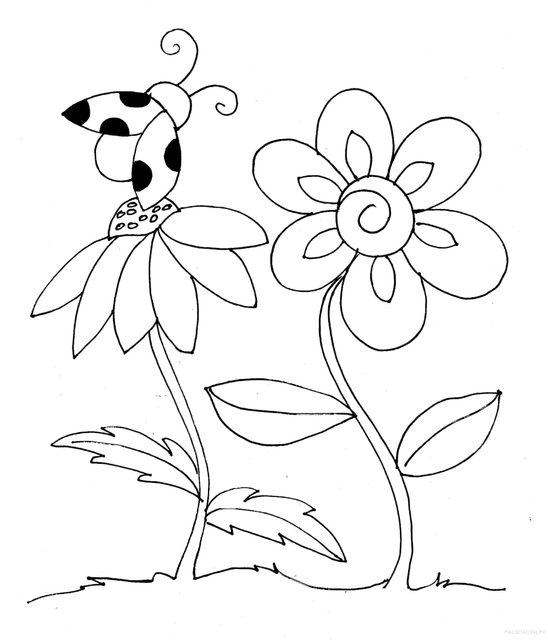 Раскраска Божья коровка и цветы