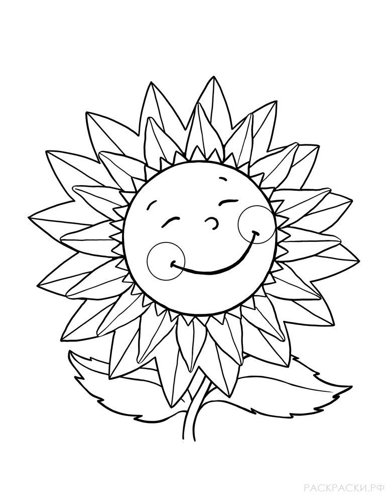 Раскраска Цветок подсолнуха