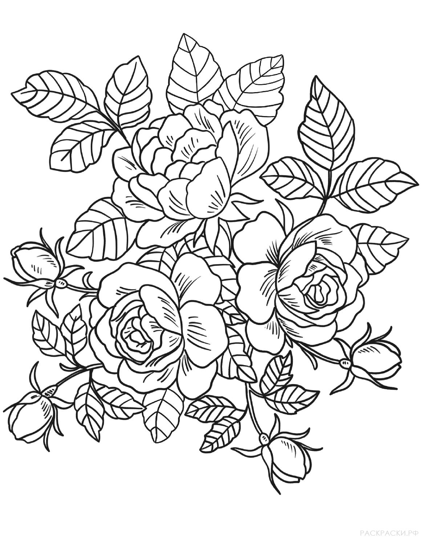 картинки розы раскраски